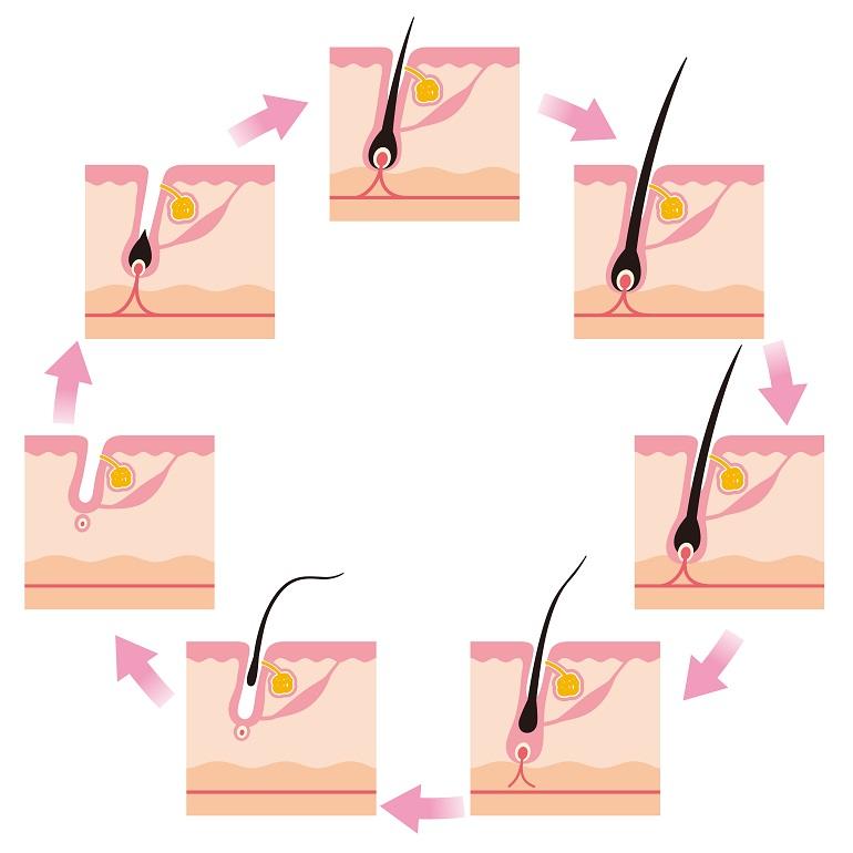 毛周期とは?脱毛が完了するまでの期間に関わる要素