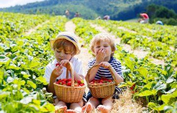 イチゴ鼻の黒ずみ解消アイテムおすすめ口コミランキング2018~原因・選び方・ケア法~